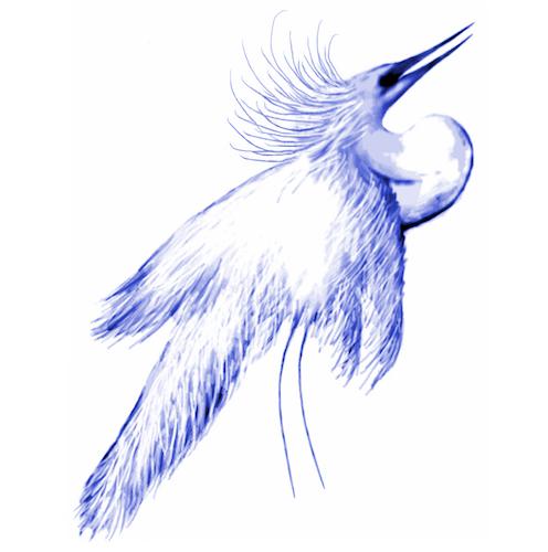 Snowy White Egret